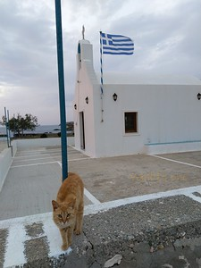 Agios Konstantinos chapel and cat