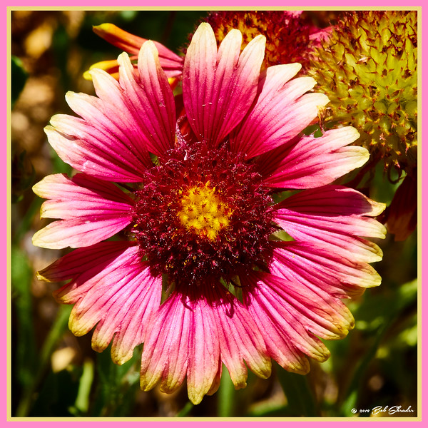 Indian Blanket in Square