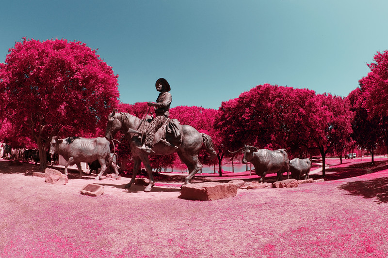 Cattle Drive in Faux Infrared