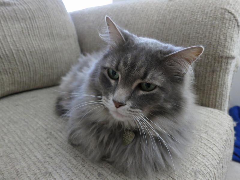 IMG_0002 Obligatory cat picture - Loki monster