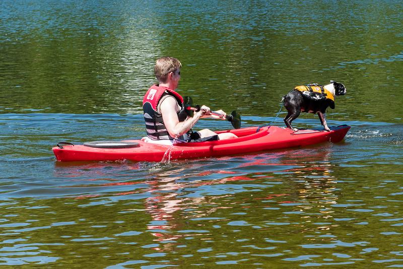 A dog.  On a kayak.