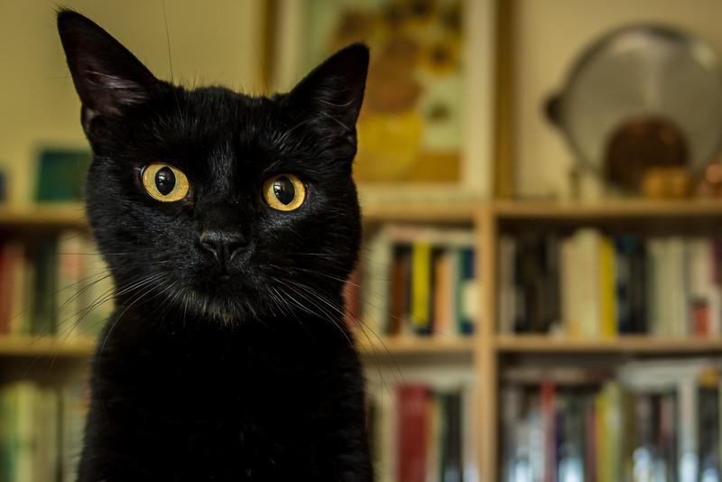 Kells, the cat.
