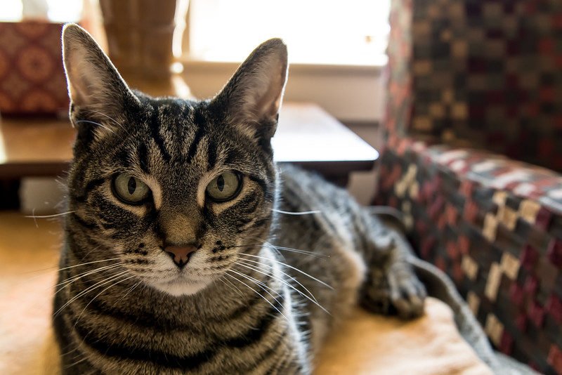 Chauncey, the cat.