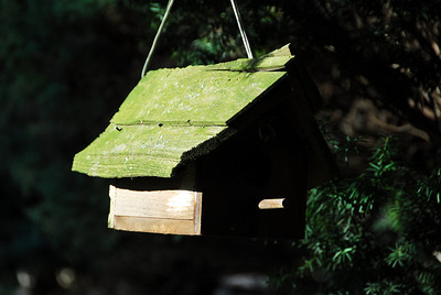 Rustic Birdhouse in the Early Morning Sun
