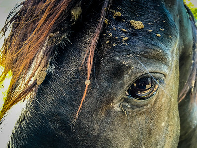 2016-04-24 Horses In A Field Across From Harris Hospital
