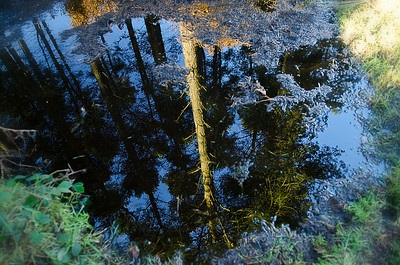 18th January - Reflection in Puddle, Cannock Chase