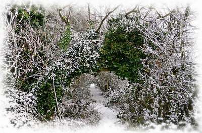 7th January - Entrance to Narnia