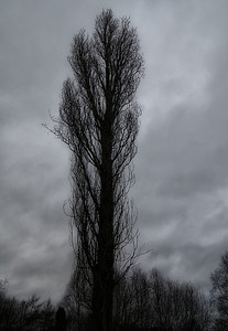 15th January - Tall Tree
