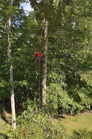 August2015 Tree Work