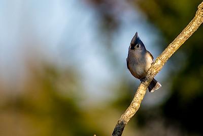 Birds -- Winter 2018