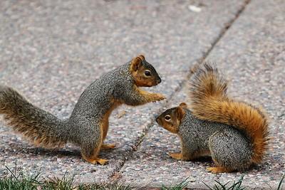 Backyard squirrels Feb 2015