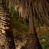 Carlsbad Caverns National Park, New Mexico