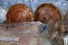 <center>Rhode Island Shellfish  <br>Winter Farmer's Market - 28 January 2012<br>Mount Hope Farm<br>Bristol, Rhode Island</center>
