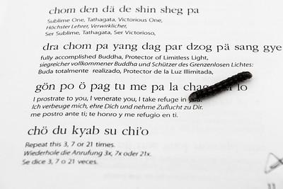 Caterpillar crawling on buddhist texts