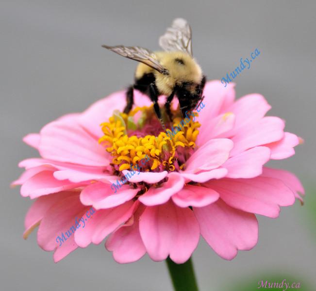 AUGUST #3<br /> <br /> Flower in Alliston, Ontario.