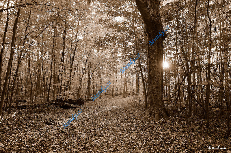 """NOVEMBER #1<br /> <br /> Hiking near Guelph Line & 401.<br /> <br /> """"Let the fields be jubilant, and everything in them; let all the trees of the forest sing for joy.""""<br /> Psalm 96:12"""