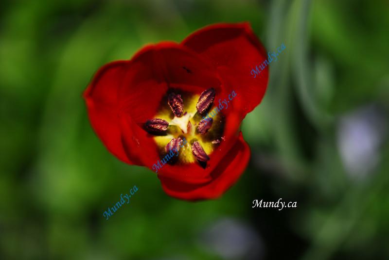 MARCH #2<br /> <br /> Flower in our garden.