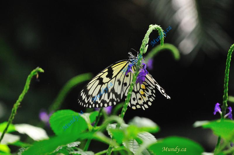 SEPTEMBER #2<br /> <br /> Butterfly Conservatory - Niagara Falls, Ontario.