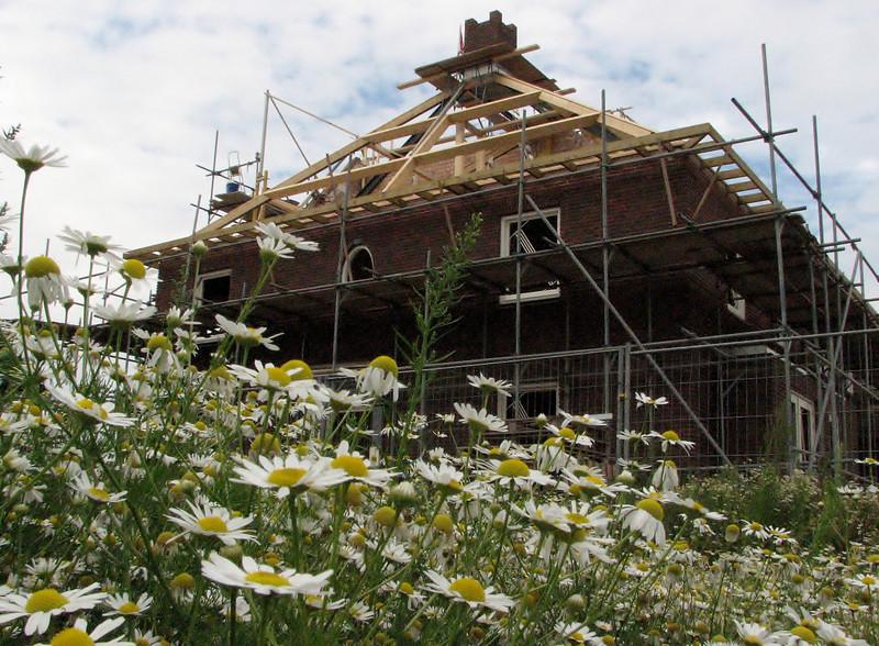 Pioneer vegetation around the house / Jufferlaan