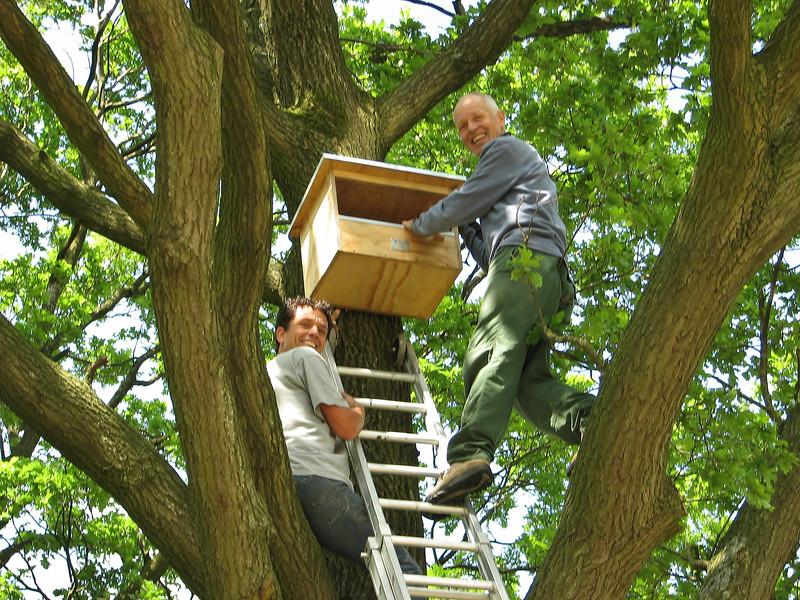Mounting a home for Kestrels, (NL: Torenvalk nestkast)