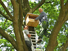 Mounting a home for Kestrels, (NL: Torenvalk nestkast)