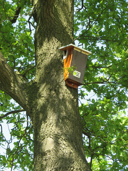 Birdhouse for tree creeper (NL: boomkruiper nestkast)