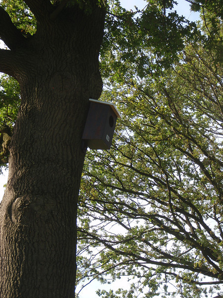 Nesting-box for a Jackdaw  (NL: Kauw)
