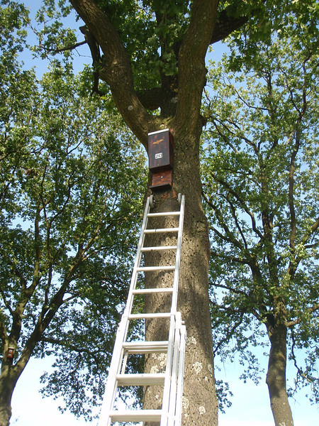 Mounting the bat-box