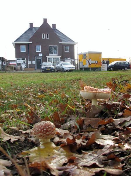 Autumn 2011, Jufferlaan, Sonniuspark