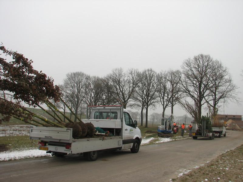 Trees like Quercus spec., Pinus sylvestris, Larix decidua and Liriodendron tulipifera (NL: tulpenboom)
