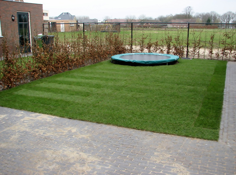 Back yard with playing lawn