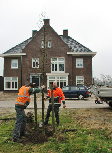 """Planting a new oak tree in """"the front garden"""":-)"""