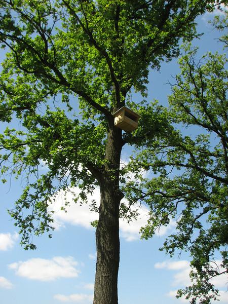 Bird home for Kestrels, (NL: Torenvalk nestkast)
