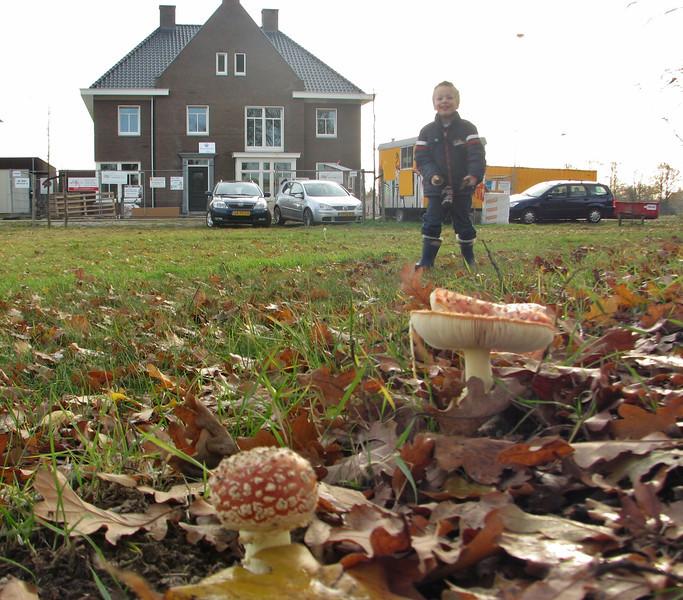 Stijn with in front: Amanita muscaria, (NL: Vliegenzwam), Autumn 2011, Jufferlaan, Sonniuspark