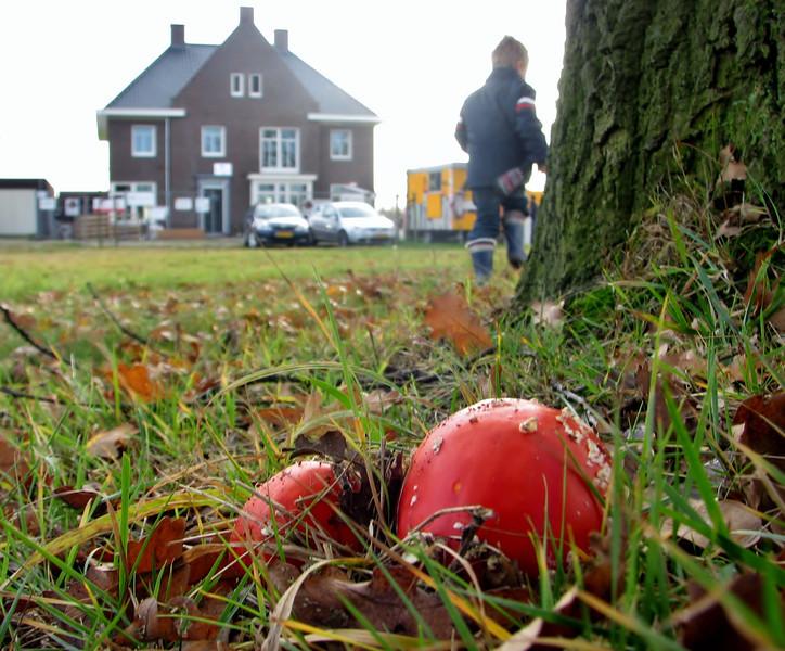 Fungus in the front garden, Autumn 2011, Jufferlaan, Sonniuspark