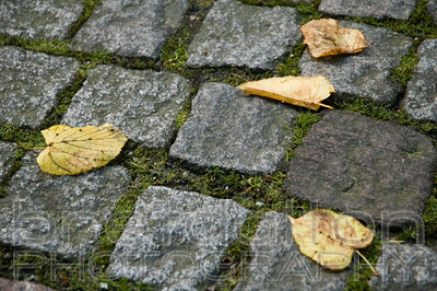 Cobblestones in Bergen, Norway