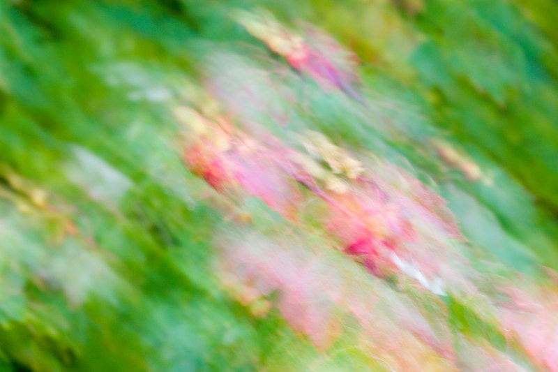 """Leaves in Motion""<br /> Assignment:  Abstract"