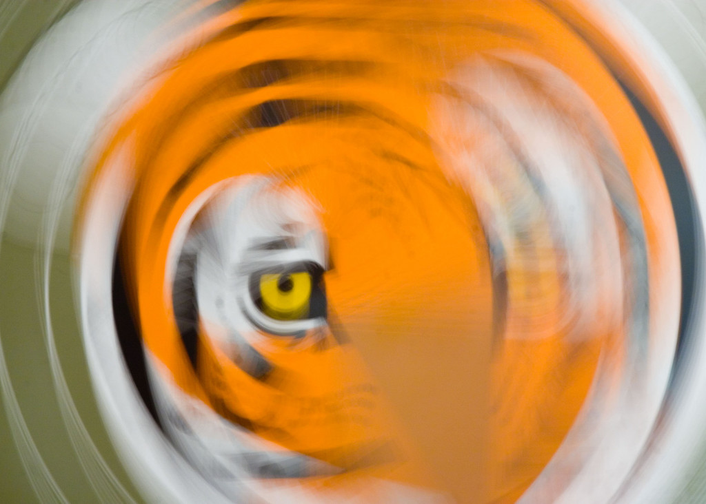"""Eye of the Tiger""<br /> Assignment:  Abstract"