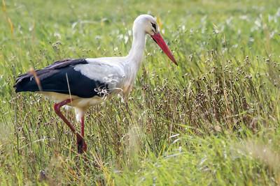 Birds of Burgenland