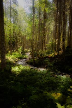 A Sylvan Stream along the way