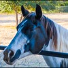2018-11-23_CurleyBarnParty_048