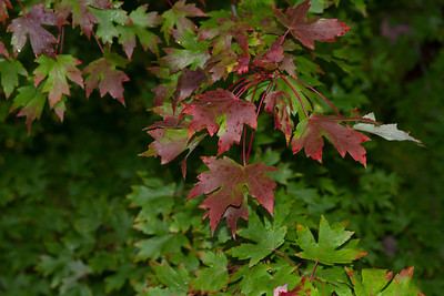 2012_10_ 13 Fall Leaves 003