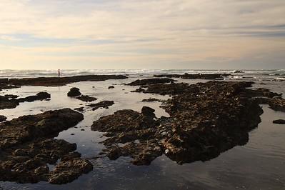 Fitzgerald Marine Reserve Feb 15th, 2015