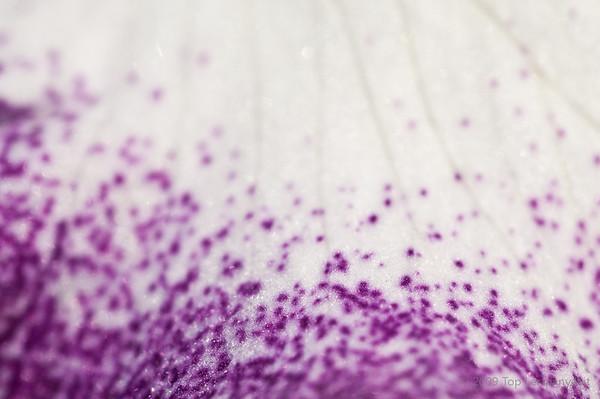 Splashes of purple