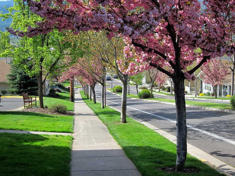 North Mountain Avenue in spring