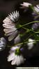 flowers2016NLSchober_1110480