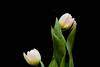 _MG_3372flowers