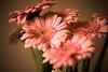 _MG_3361flowers