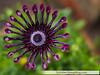 flowers2016NLSchober_1110478