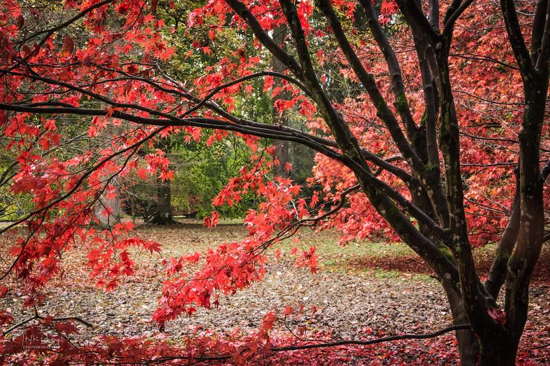 Autumn colour I
